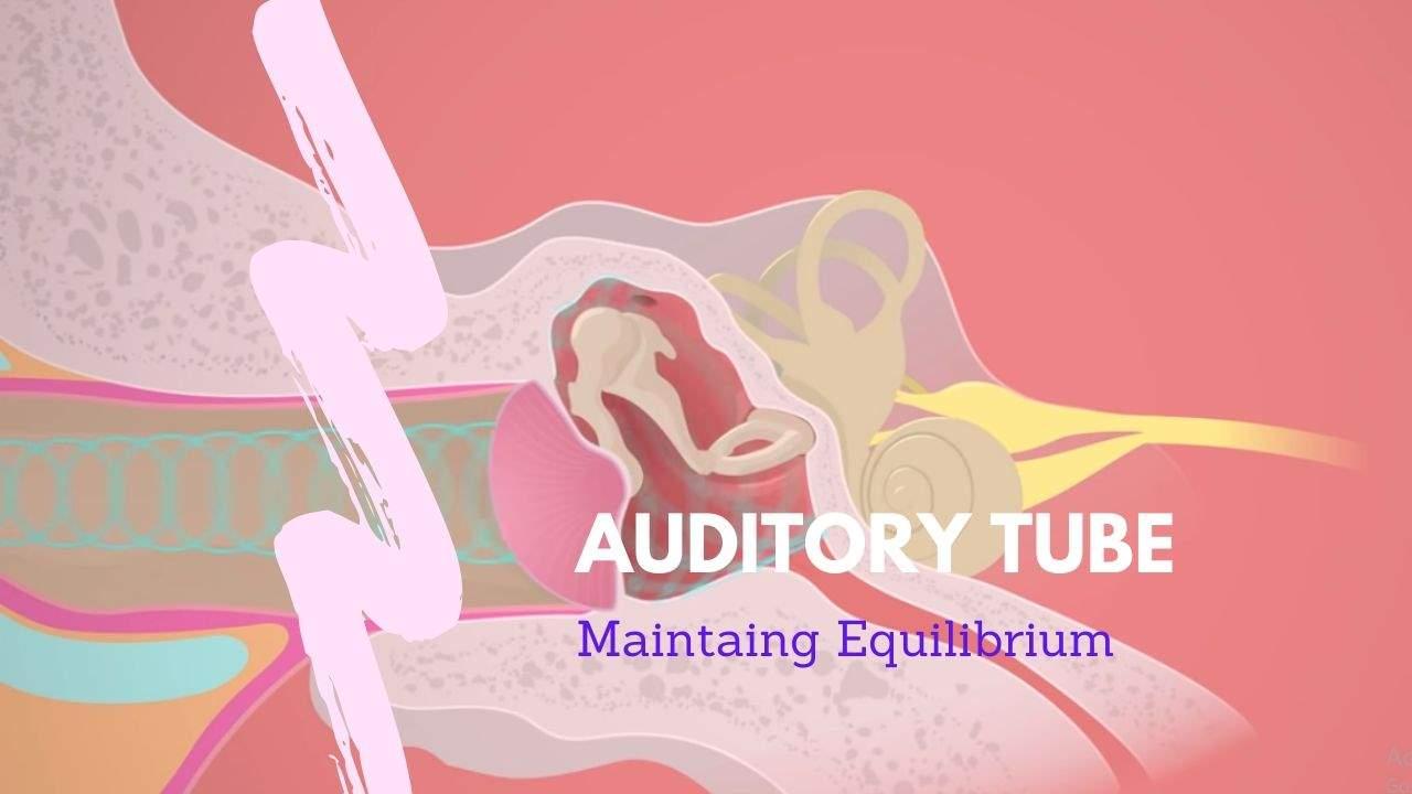 Auditory tube